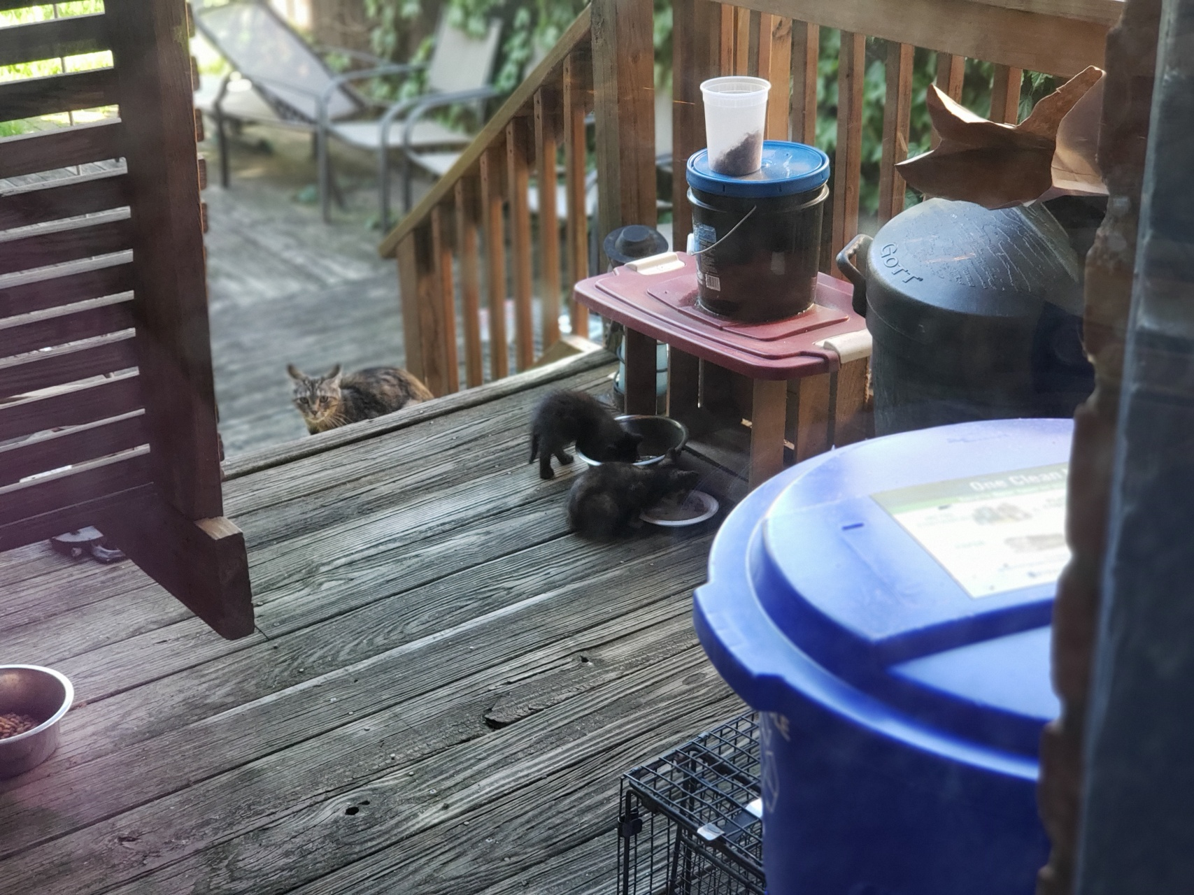 Mama cat watches kittens eat