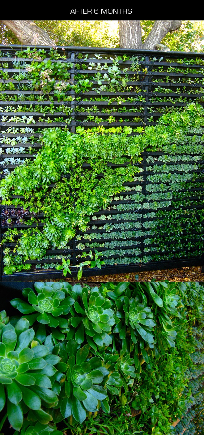 Living wall to add protection for our cob bench