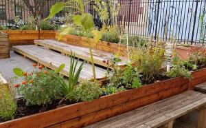 Third Street School Garden Outdoor Classroom