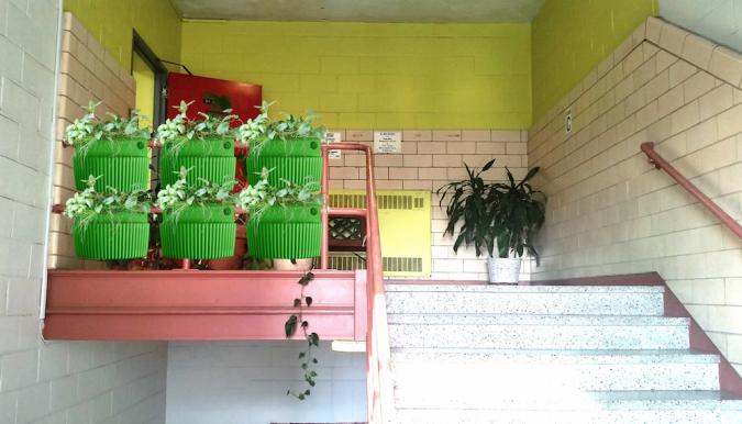 stairwell vertical garden