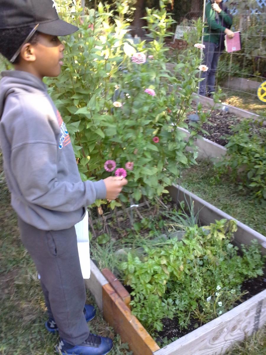 Bugs garden starter ioby for Brooklyn urban garden charter school